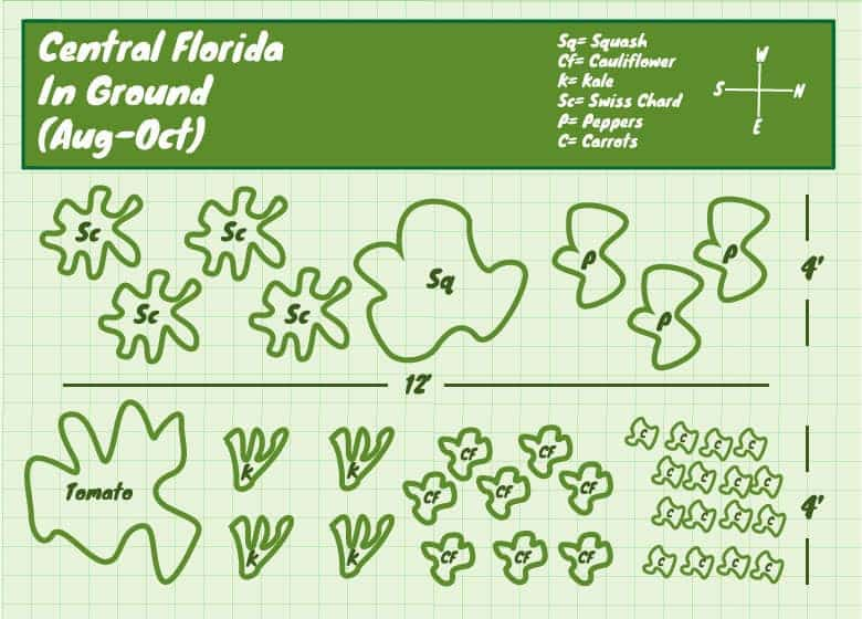 Florida Vegetable Garden Layout Things To Look Out For