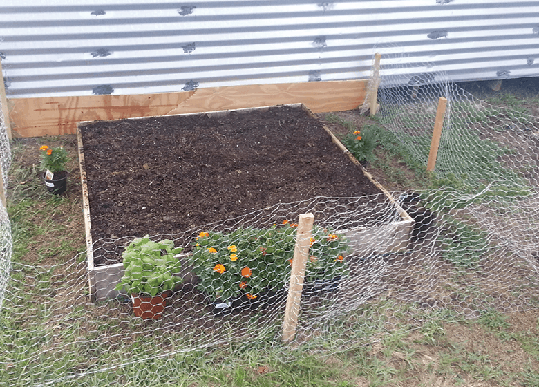 Florida Vegetable Gardening A Complete Beginners Guide