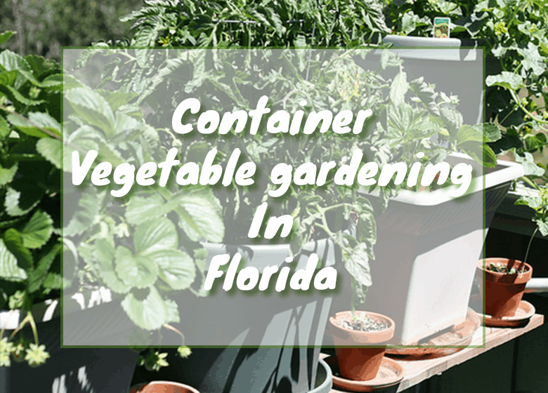 Container Vegetable Gardening In Florida