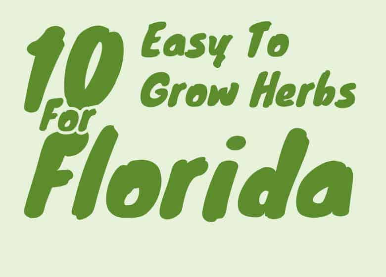 10-easy-to-grow-herbs-for-florida