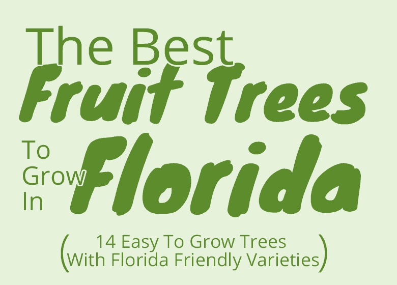 Best-Fruit-trees-for-florida-featured-image