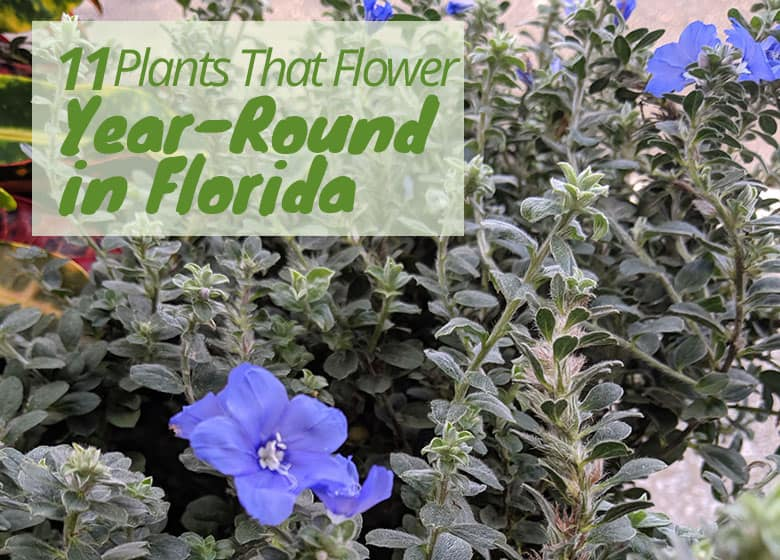 Flowers That Bloom Year Round In Florida 11 Popular Choices